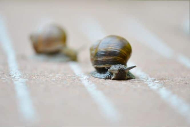 When and how to teach manners to kids is a slow process. This is a picture of two snails racing.